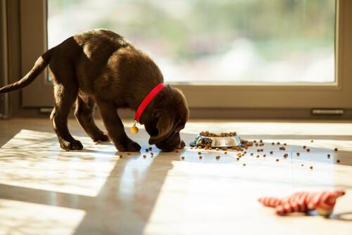 Un Perro Puede Comer Atún Enlatado