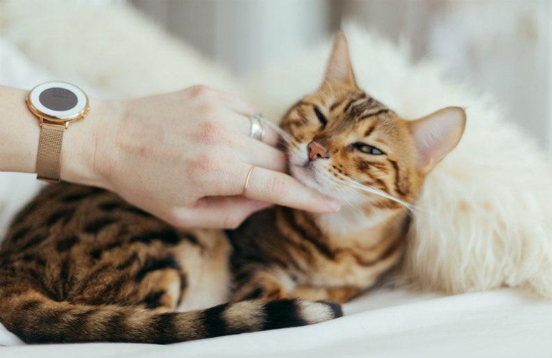 Pastillas Para Desparasitar Gatos
