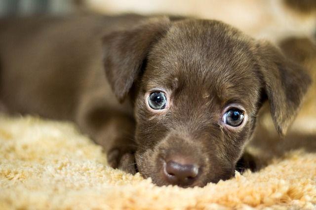 Pastillas Para Desparasitar Perros Nombres