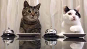 Diferencia Entre Gato Y Gata