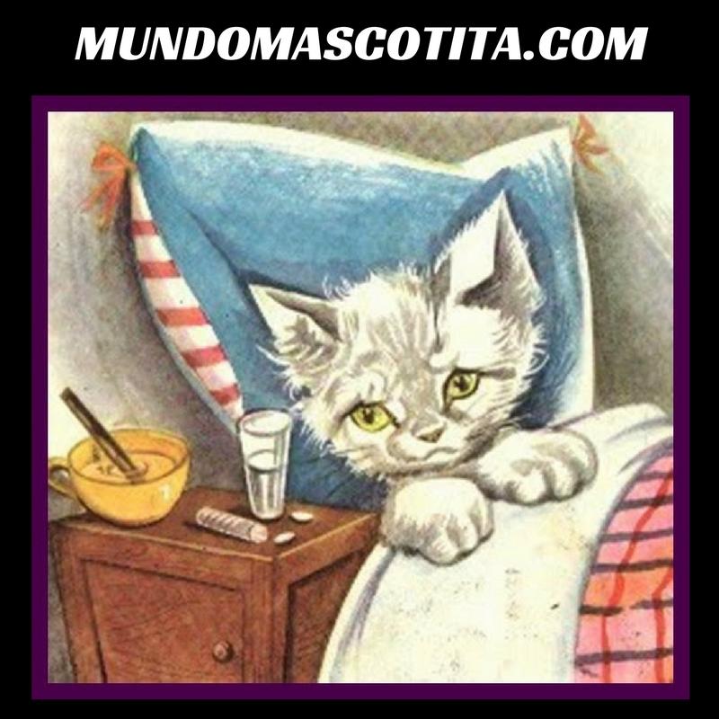 Lombrices En Gatos Síntomas Y Tratamientos