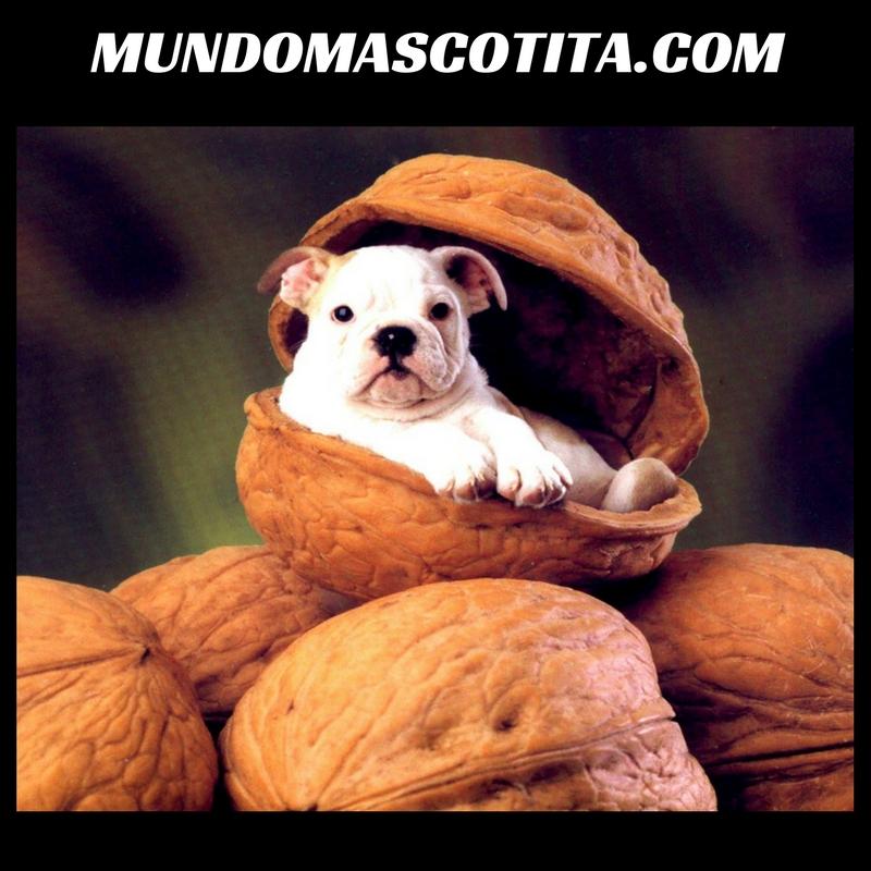 Los Perros Pueden Comer Nueces Y Almendras