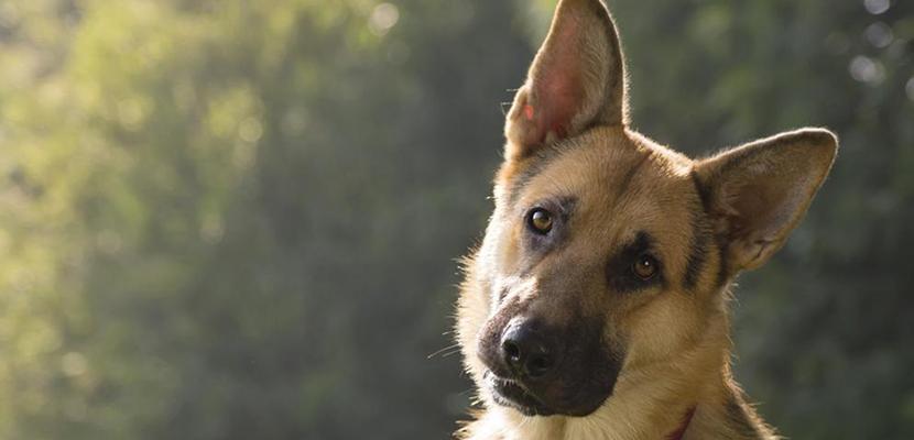 Que Pasa Si Mi Perro se Quita los Puntos