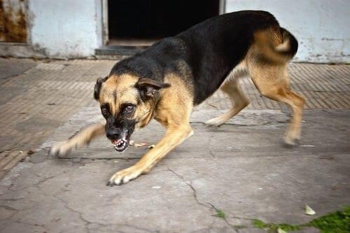 Síntomas Para Saber si mi Perro Tiene Rabia