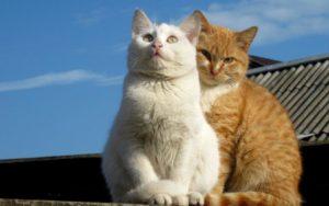 Como Hago Para Que Mi Gata Acepte a un Gatito Nuevo