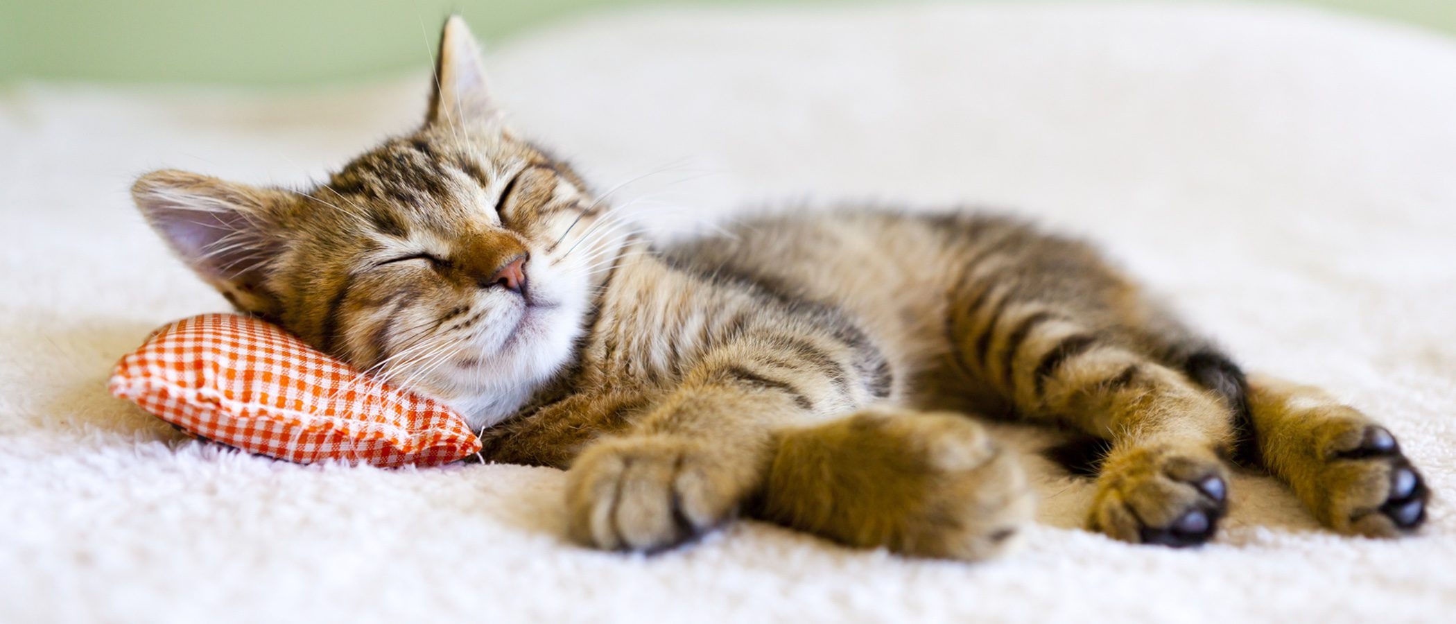 Como Hago Para Que Mi Gato No Rasguñe Los Muebles