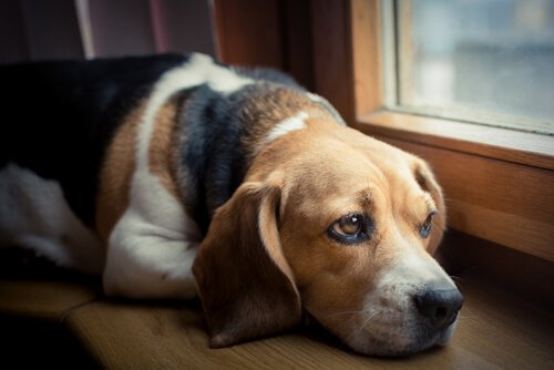 Como Saber Si Mi Perro Está Envenenado