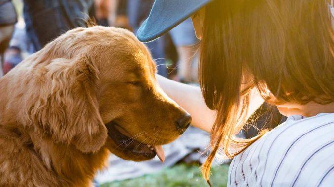 Como los Perros Ayudan a las Personas