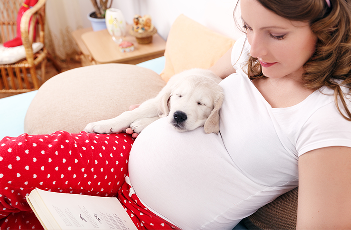 Como los Perros Detectan el Embarazo