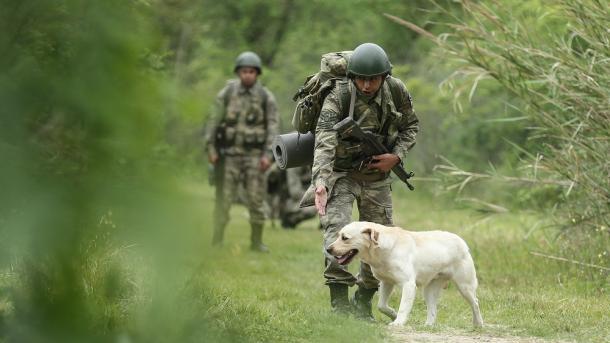 Como los Perros Olfateadores Detectan Explosivos y Narcóticos
