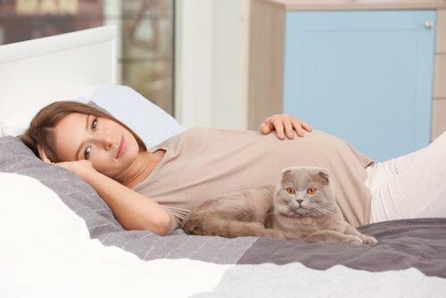 El Gato Afecta a las Mujeres Embarazadas