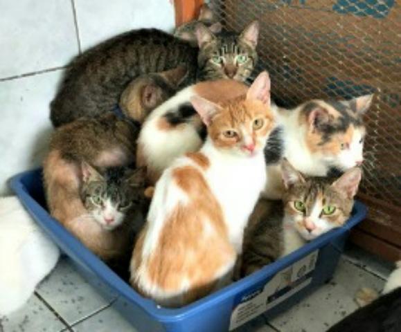 Las Gatas Pueden Tener Gatitos de Diferentes Gatos
