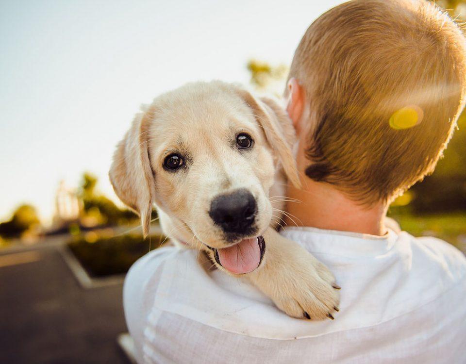 Las Mascotas Benefician la Salud