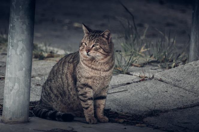 Los Gatos Vuelven Cuando se Escapan