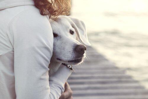 Los Perros Ayudan a Superar la Depresión