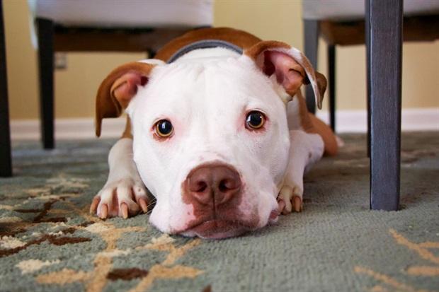 Los Perros Sufren Con La Pirotecnia