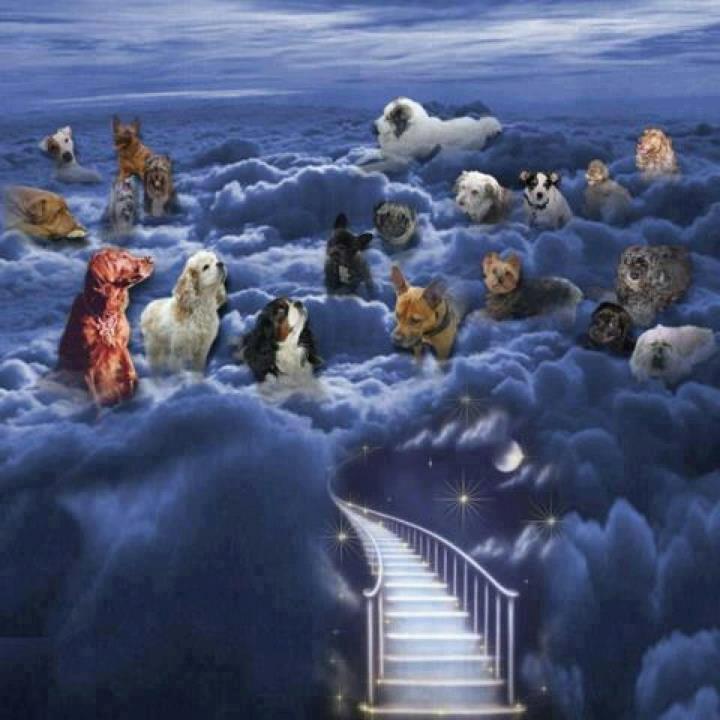 Los Perros Van al Cielo Cuando Mueren