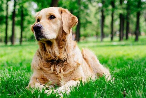 Perros Ideales Para Niños Hiperactivos