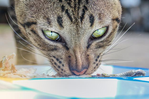 Porque los Gatos no Pueden Comer Huesos de Pollo o Pescado