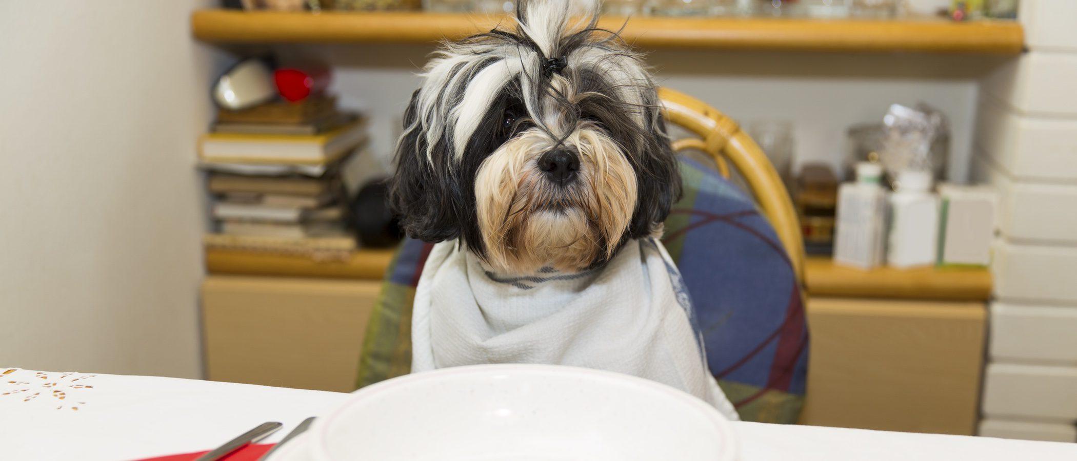 Que Frutas Pueden Comer Los Perros De Raza Pequeña
