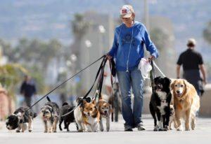 Quienes Viven Más Los Perros Grandes O Pequeños
