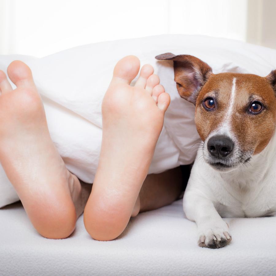 Dormir Con Perros Es Malo Para La Salud