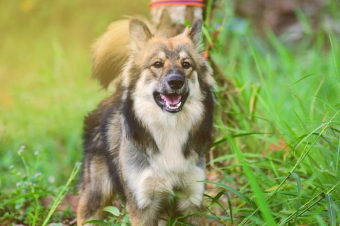 El Perro Del Vecino No Para De Ladrar Que Hago