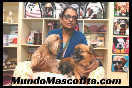 Hoteles Para Perros Madrid Precios