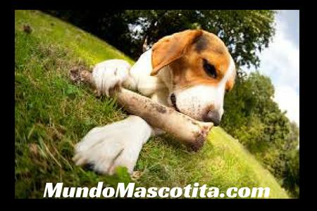 Huesos de Jamón para Perros
