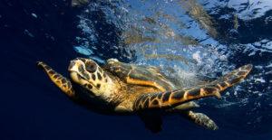 Información Sobre las Tortugas Marinas y Terrestres
