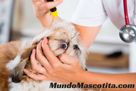 Limpiar Ojos Perro Manzanilla