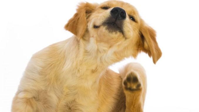 Pastillas Contra Pulgas Y Garrapatas En Perros