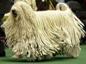 Perros de Raza Grande Peludos