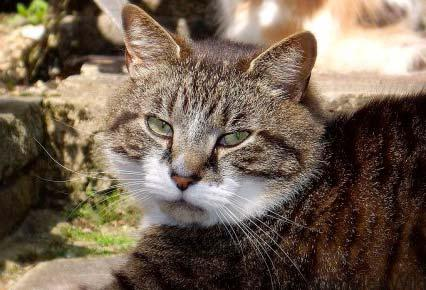 Personalidad de los Gatos Según su Color