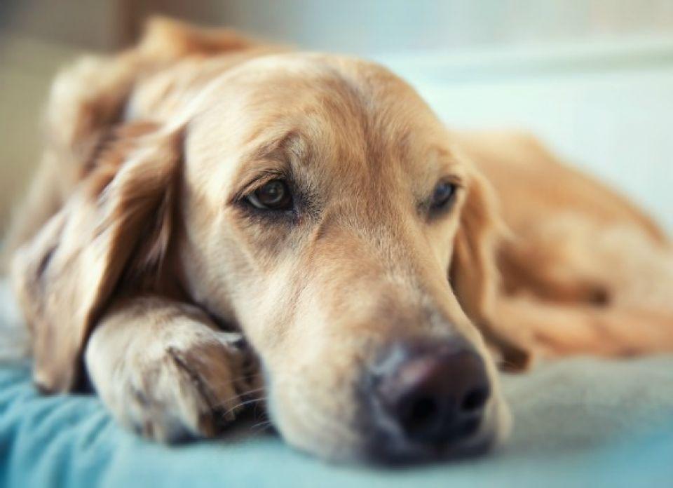 Problemas Neurológicos en Perros Jóvenes y Viejos