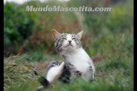 Pulgas en Gatos Remedios Caseros