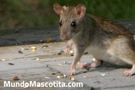 Ratones en Casa que Significa