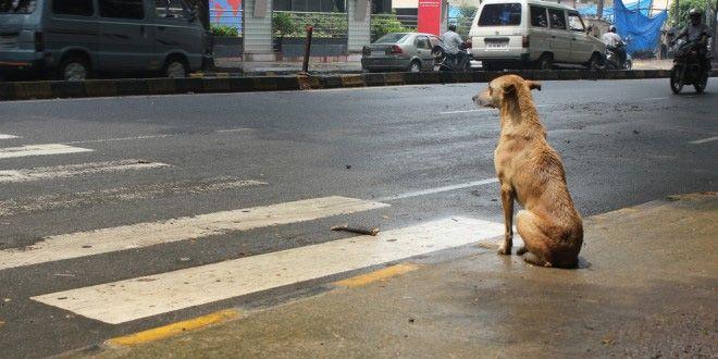 Seguros De Salud Para Perros