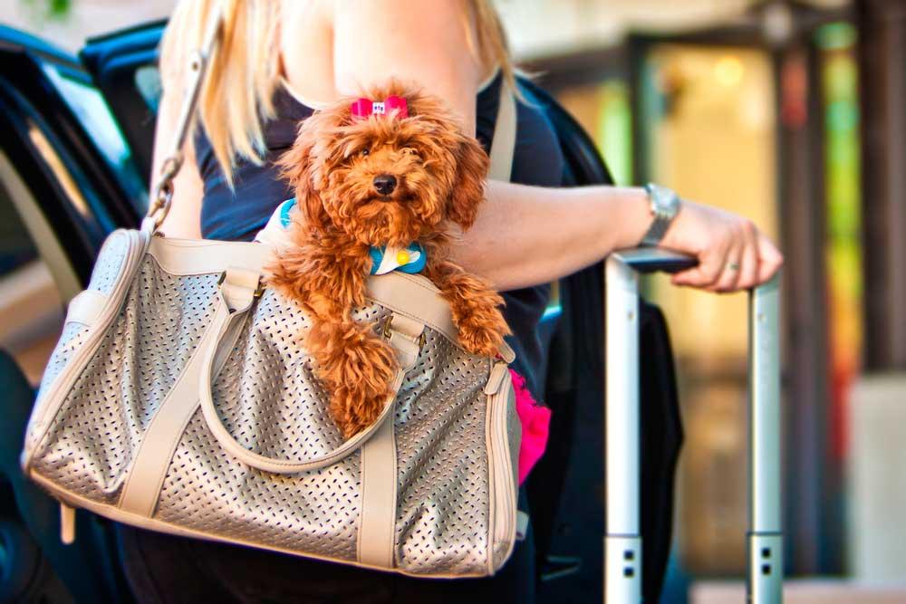 Viajar con Perros en Autobús