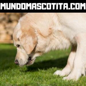 Vomito Verde en Perros Causas y Tratamientos