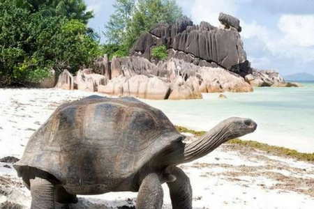 Animales De Las Islas Galapagos Con Sus Nombres