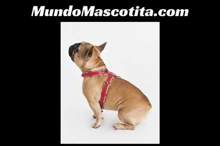 Arnes de Seguridad para Perros Homologado
