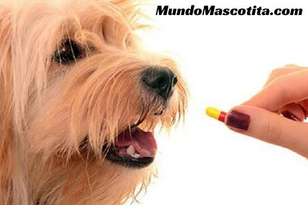 Biodramina Para Perros Dosis