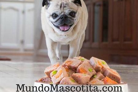 Como Preparar Comida Casera Para Perros Cachorros