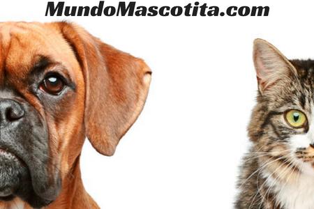 Enfermedades Oculares en Perros y Gatos