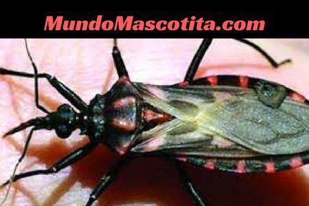 Insectos de la Humedad que Pican