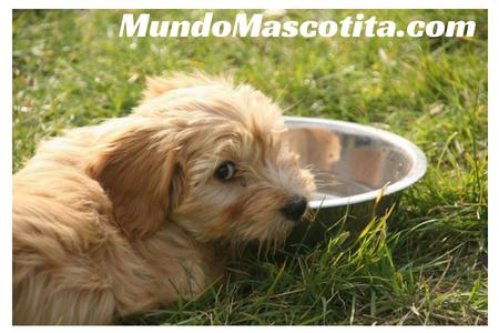 Las Diez Comidas Prohibidas Para Perros