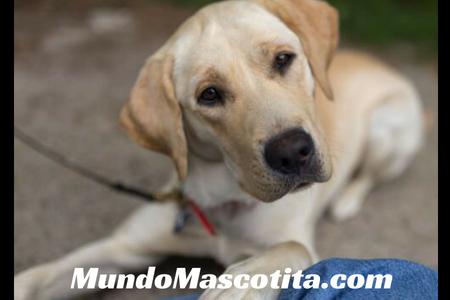 Luxación de Cadera en Perros por Traumatismo