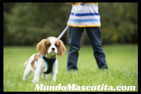 Mi Perro Ladra a Otros Perros Cuando Pasea