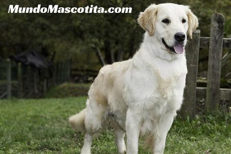 Perros de Búsqueda y Rescate Razas